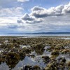 Exploring Local State Parks: Tide Pools, Geysers & Sandy Beaches