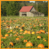 Fall Activities in Olympia: Pumpkin Patches, Apple Festivals & Haunted Mazes