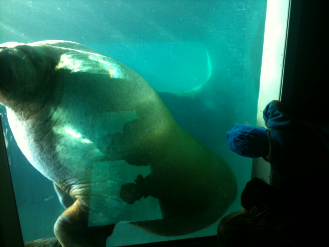 Things To Do Point Defiance Zoo Aquarium